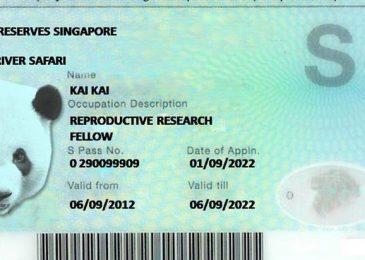 Một Số Điều Cần Biết Về Thẻ S Pass Singapore